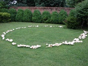 Lawn Disease Control Monmouth Middlesex and Ocean Counties