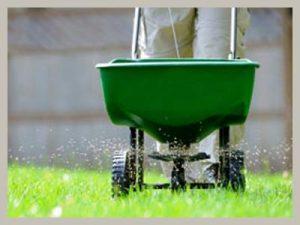 fertilizing-lawn
