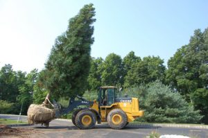 Monmouth Middlesex and Ocean Counties Transplanting Tree Shrub