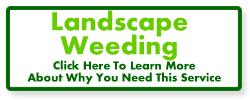 landscape weeding