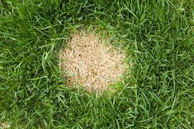 How to Repair And Seed Bare Spots in the Lawn